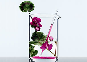 Un ingredient naturel  lhuile de geranium